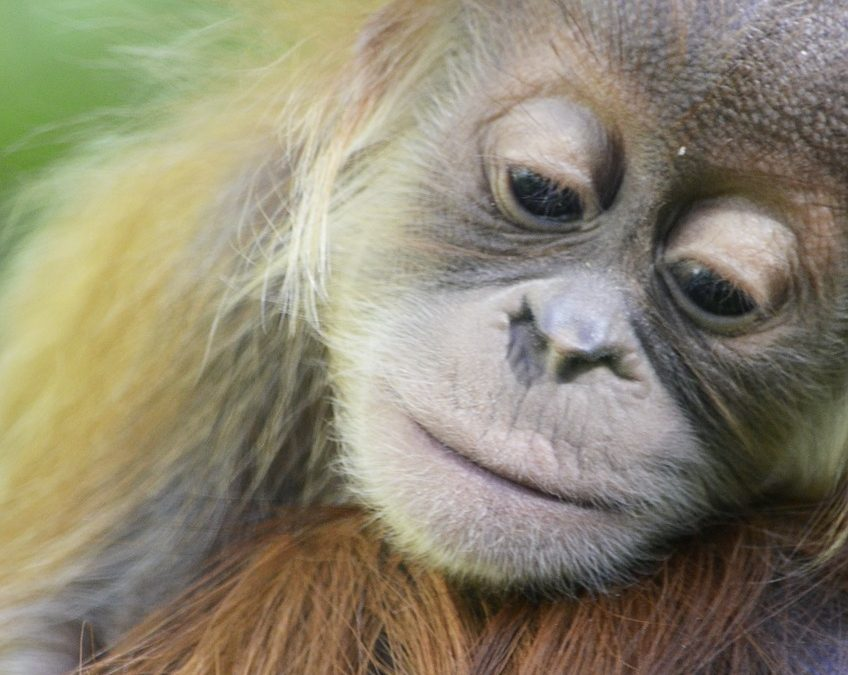 Borneo Holidays – More than just Orangutans!