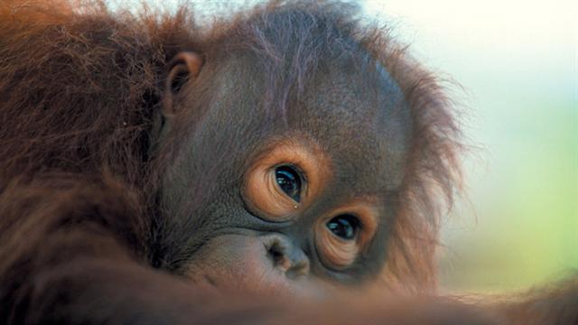 Cute monkey 2