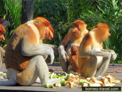 Wildlife Tours in Borneo