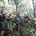 Borneo Travel Jungle Tours