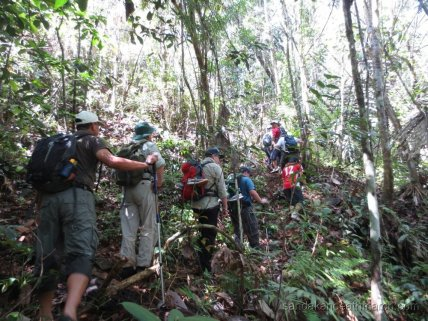 Borneo Travel Jungle Tours