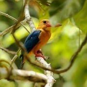 Bird Watching Borneo