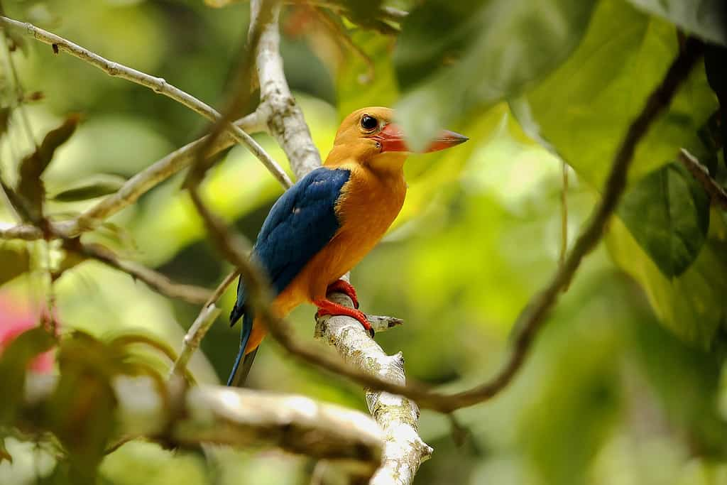 Bird Watching Borneo